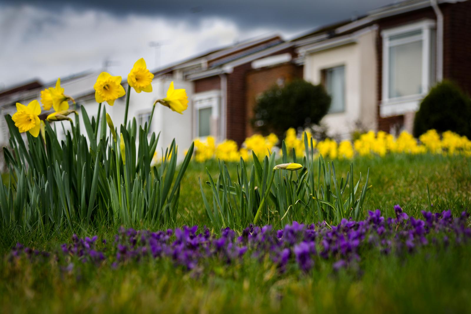 Spring-Vibrance