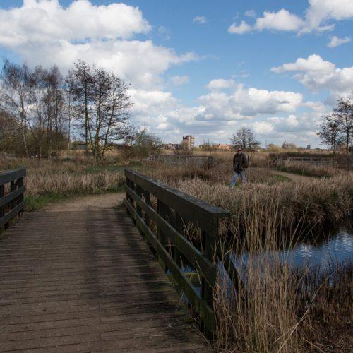 Walker-at-the-WetlandsRSZD