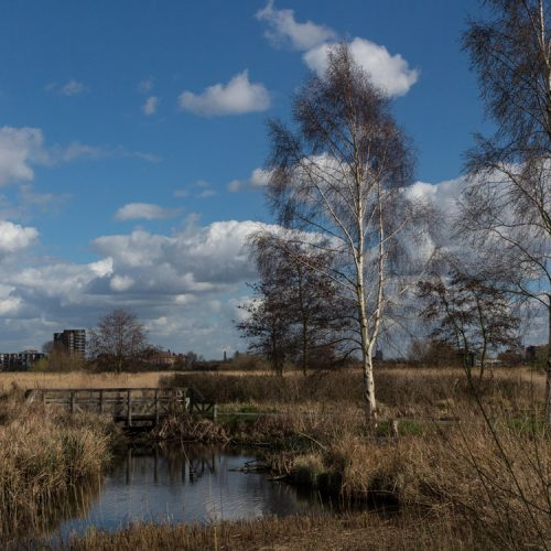 Wetlands-view-2-RSZD