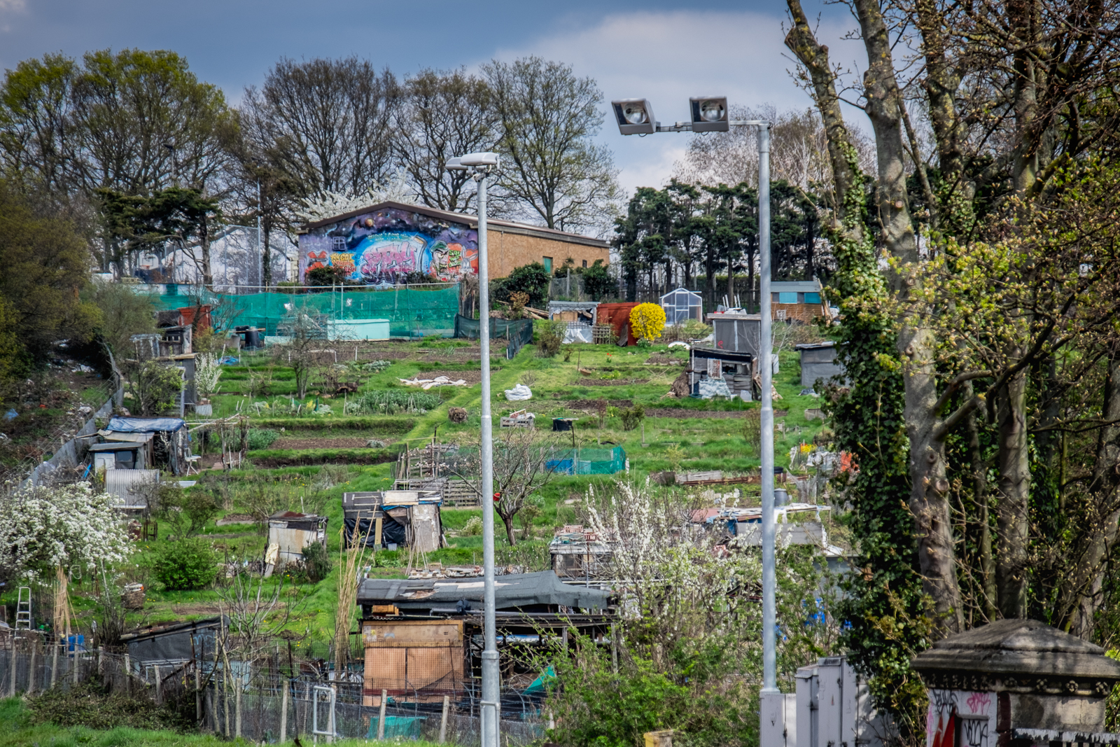 20160414_Lambeth_Tulse-Hill_Allotments-by-the-station