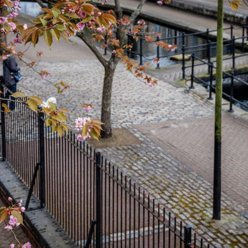 20160426_Southwark_Albion-Channel_Cherry-Blossom