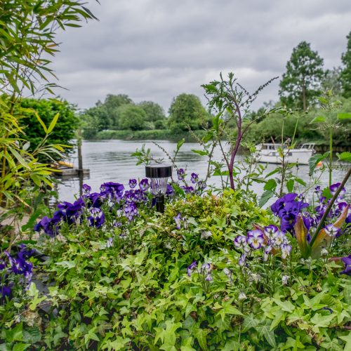 20160530_Richmond-Upon-Thames_Riverside_White-Swan-Pub-Twickenham