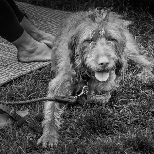 20160604_Lewisham_Hilly-Fields_Shaggy-Dog-Story