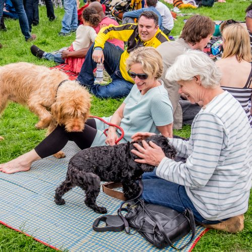 20160604_Lewisham_Hilly-Fields_who-let-the-dogs-out
