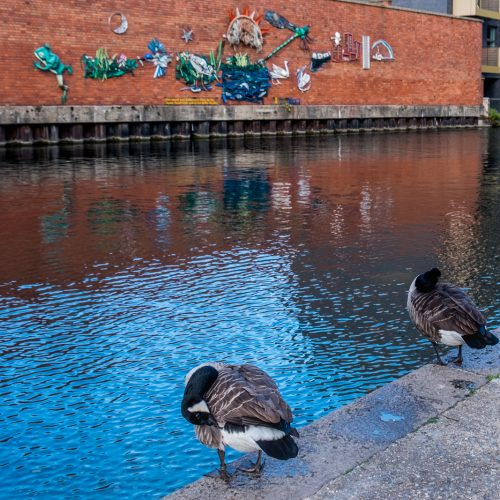 20161018_Westminster_Grand-Union-Canal-Maida-Vale_Open-Air-Gallery-for-Geese