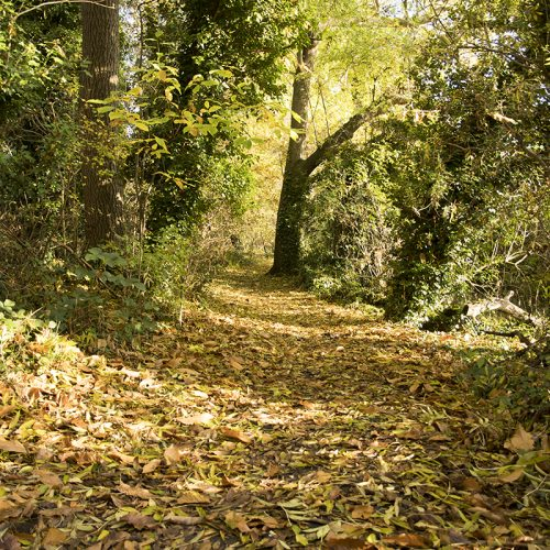 20161111_Bromley_Scadbury-Park-Nature-Reserve_Landscape_Winter_A-leaf-strewn-path