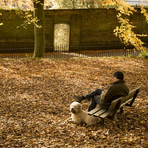 20161116_Barnet_Hampstead-Heath_Landscape_Winter_Dog-looking-out-for-its-owner