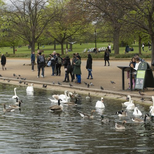 2017-04-17-Hyde-Park_Serpentine_Spring_Fauna-and-People
