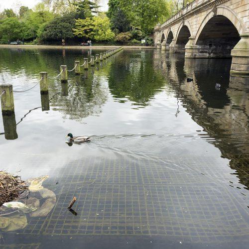 2017-04-17-Westminster_Hyde-Park_Landscape_Spring-Reflections