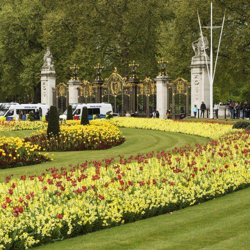 2017-04-17-Westminster_Spring_Flora_Landscape-Buckingham-Palace-2