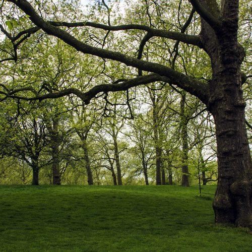 2017-04-17-Westminster_Spring_Flora_Landscape-Green-Park