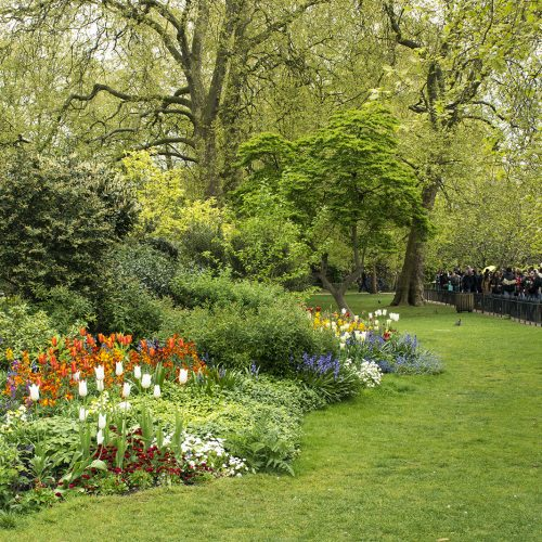 2017-04-17-Westminster_Spring_Flora_Landscape-St-Jamess-Park-Flower-Beds-2