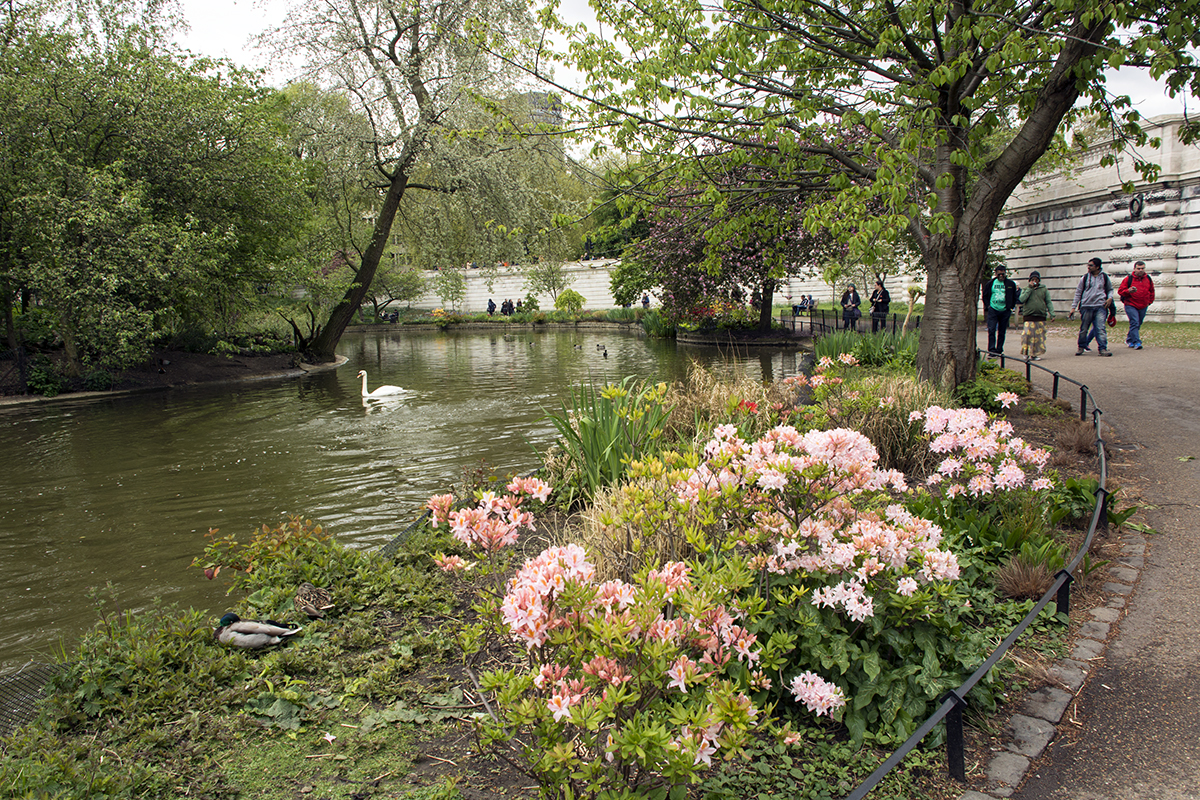 2017-04-17-Westminster_St-Jamess-Park_Spring_Landscape-The-Lake-near-Buckingham-Palace