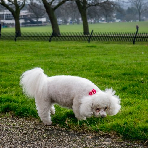 20170215_Bexley_Danson-Park_Red-Ribbon