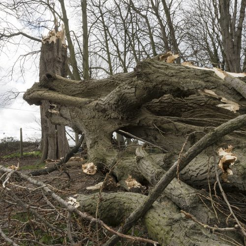20170223-Wandsworth-Thames-Path-Winter-Storm-Doris-breaks-tree