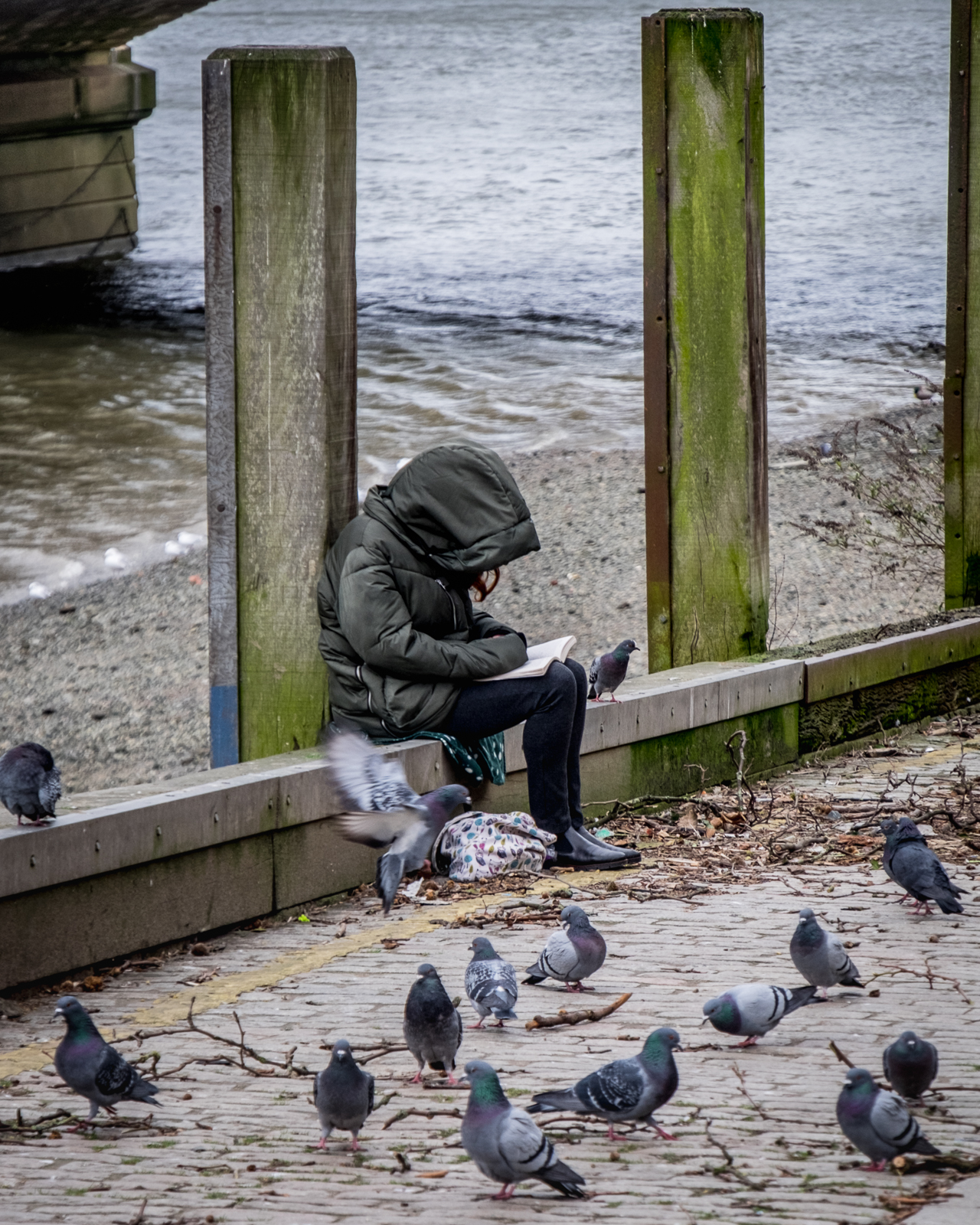 20170223_Wandsworth_Putney-Embankment_Pidgeon-Literacy