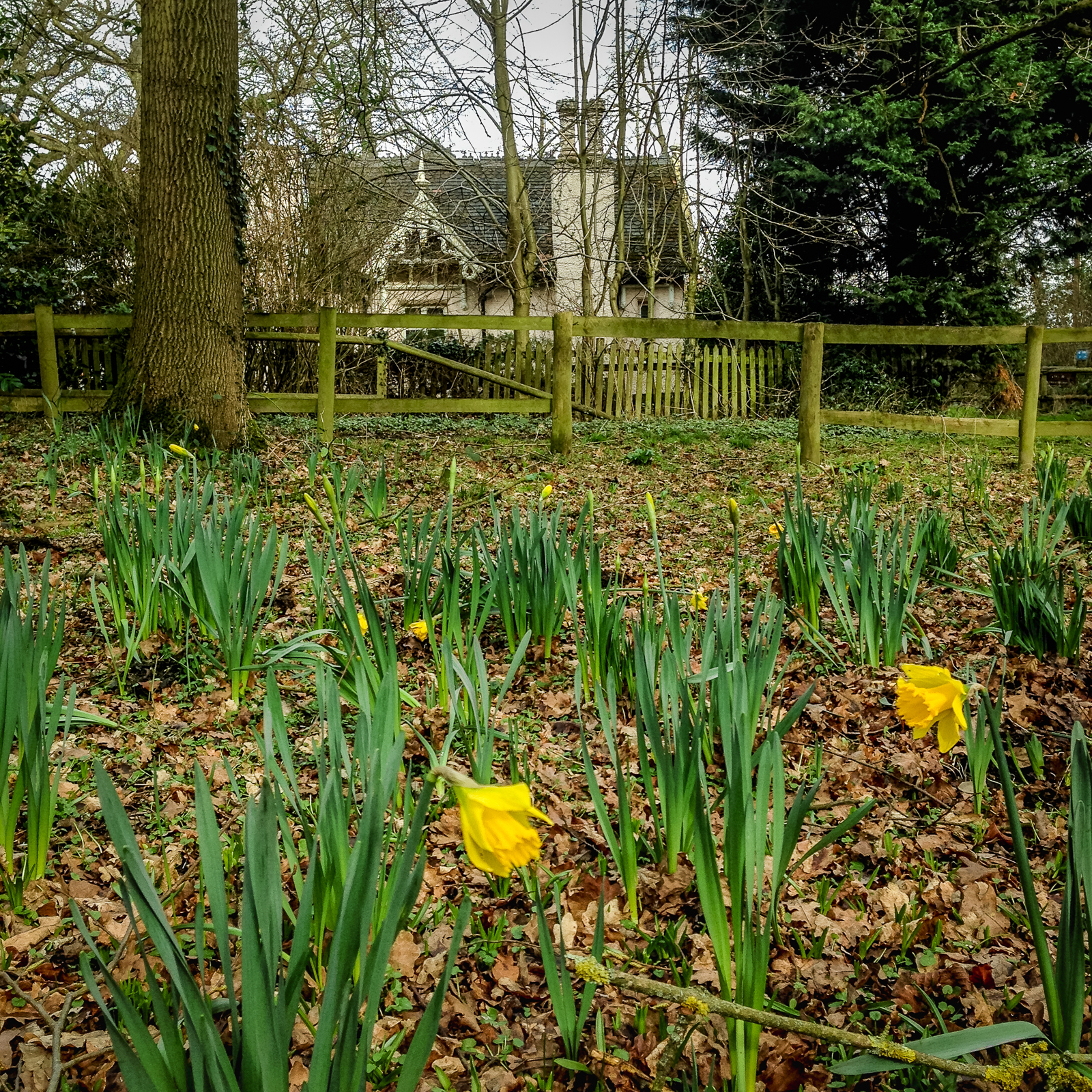 20170301_Enfield_Whitewebbs-Park_Little-House