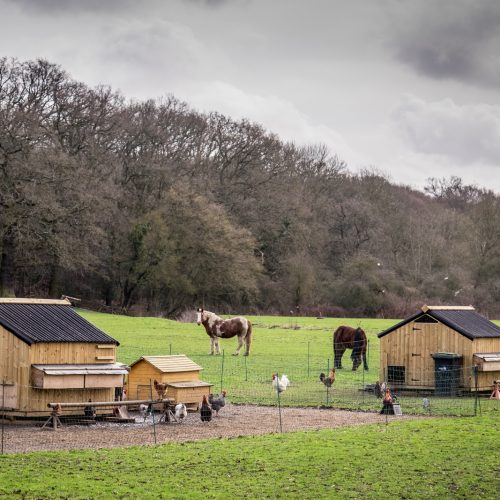 20170301_Enfield_Whitewebbs-Road_Animal-Farm-2017
