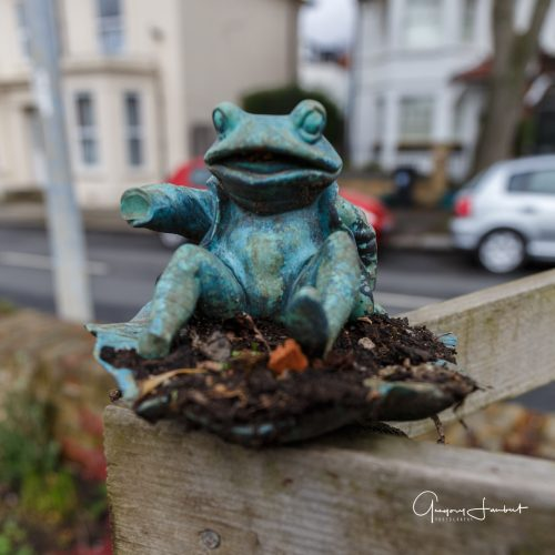 20170308_Hounslow_Strand-on-the-Green_Sitting-Frog