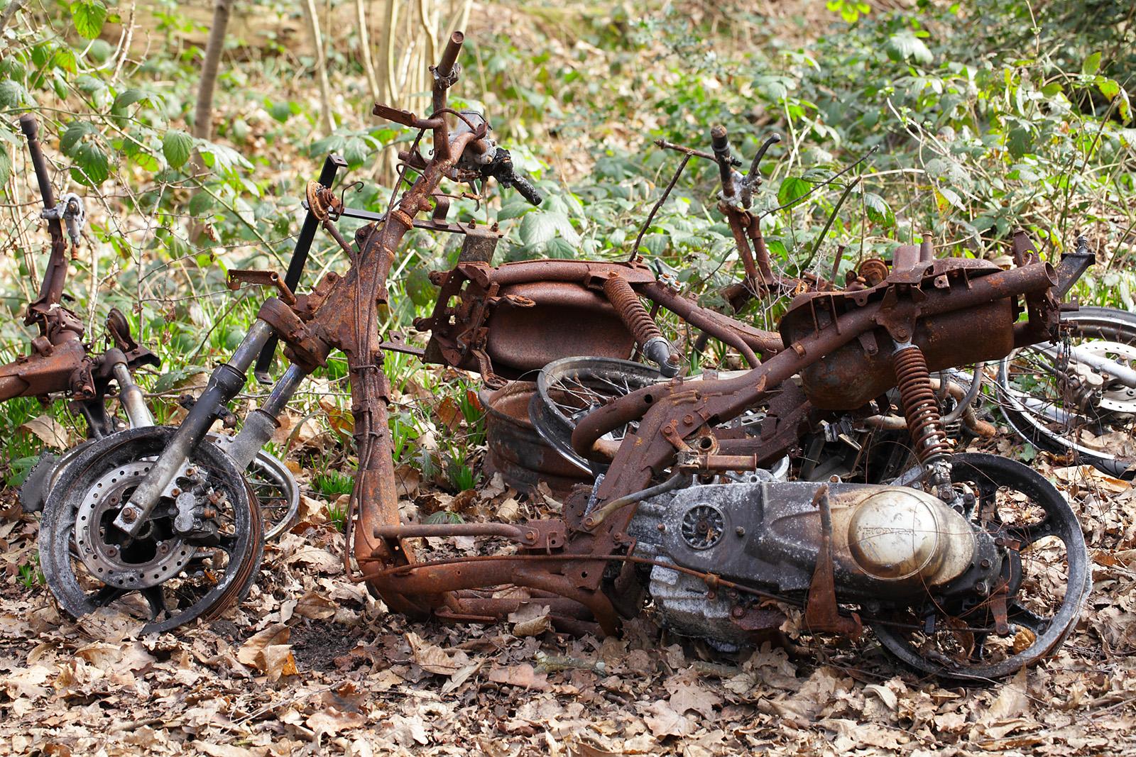 20170309_Croydon_Birch-Wood_Rust-in-pieces
