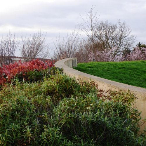 20170313_Newham_Memorial-Recreation-Ground_Shrubs-on-the-hill