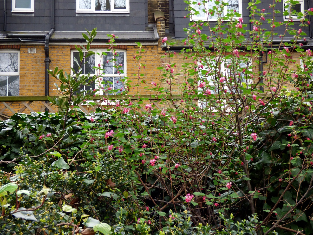 20170320_Tower-Hamlets_Grove-Hall-Park_Spring-Bushes