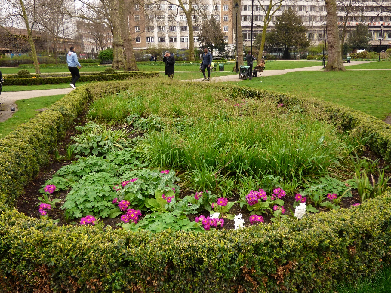 20170323_Camden_Russell-Square_Flower-Beds-at-Russell-Square