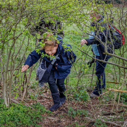 20170323_Croydon_Kenley-Common_Brambley-Path