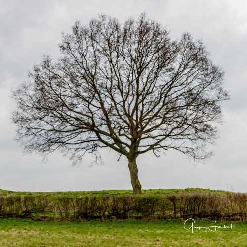 20170323_Croydon_Kenley-Common_The-Lonely-Tree