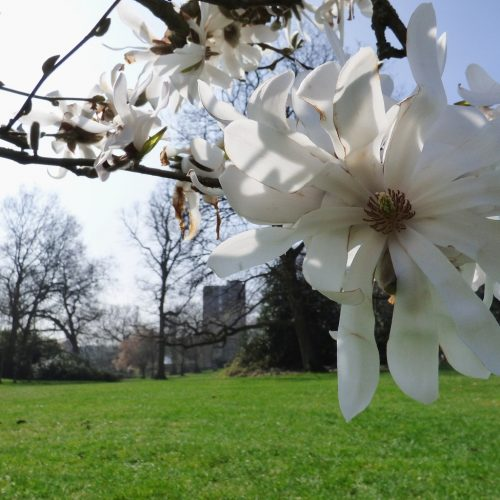 20170327_Bromley_Crystal-Palace-Park_Bloomed-over