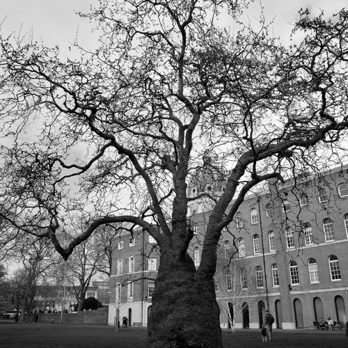 20170401_Southwark_Kennington-Road_Tree-at-back-of-Imperial-War-Museum