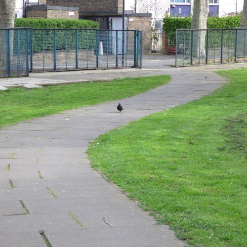 20170402_Hackney_Somerford-Grove_Pigeon-pondering-at-Somerford-Grove