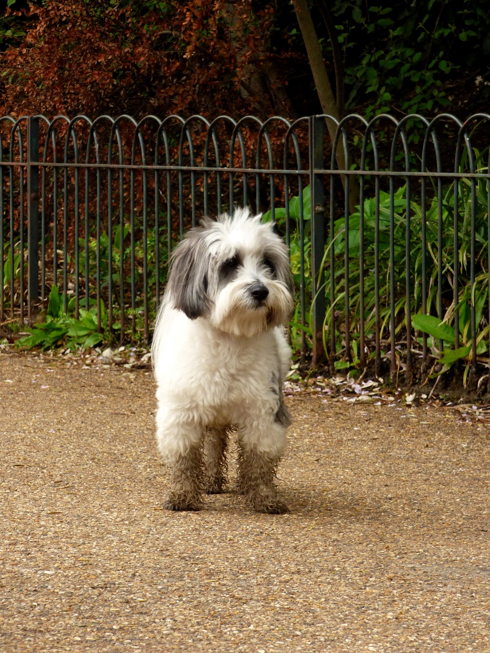 20170407_Westminster_Hyde-Park_Mud-boots