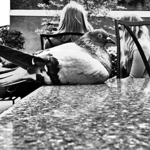 20170407_Westminster_Kensington-Gardens_waiting-for-table-service