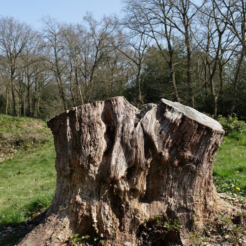 20170408_Bromley_West-Wickham-Common_Opening-the-canopy