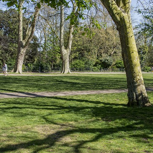 20170409_Hammersmith-and-Fulham-_Bishops-Park_-Plane-trees