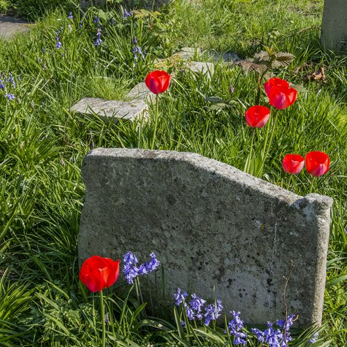 20170409_Hammersmith-and-Fulham_Brompton-Cemetery-_Spring