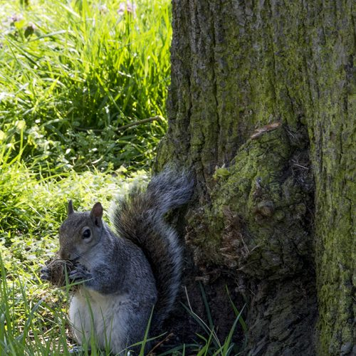 20170409_Hammersmith-and-Fulham_Brompton-Cemetery_Nibbling-breakfast
