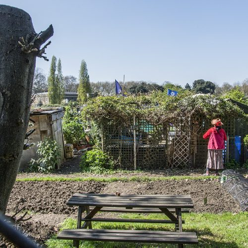 20170409_Hammersmith-and-fulham_Fulham-Palace-Meadows-Allotment_Attending-her-patch-copy