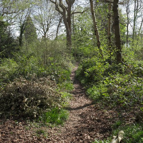 20170412_Croydon_Spring-Park-Wood_Path