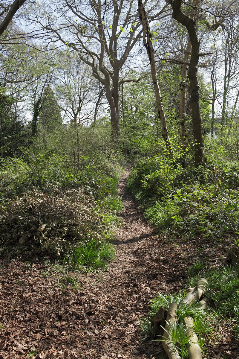 20170412_Croydon_Spring-Park-Wood_Path