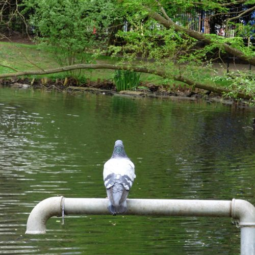 20170414_Hackney_Springfield-Park_Contemplating