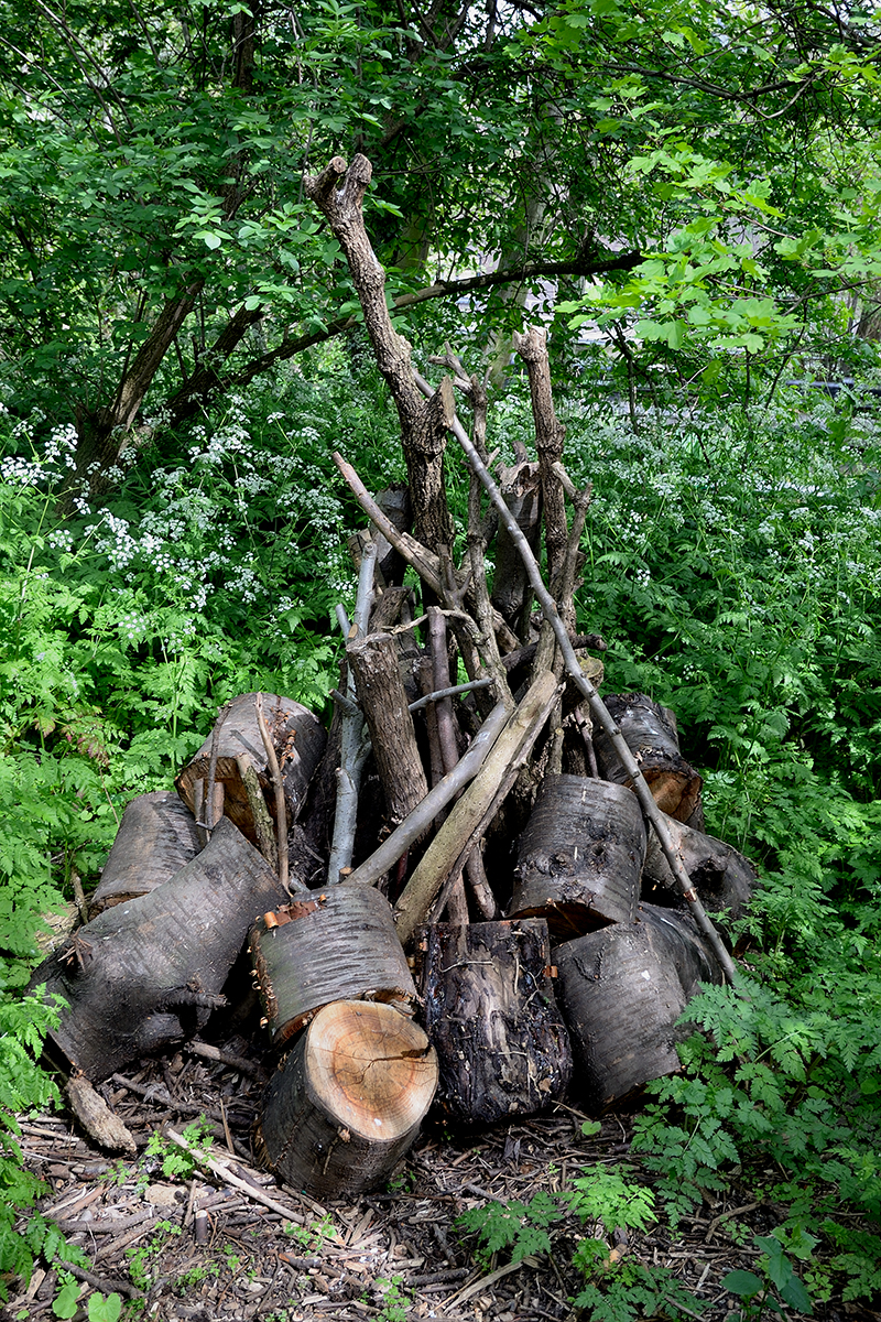 20170415_Camden_Camley-Street-Natural-Park_Logs-from-coppiced-trees