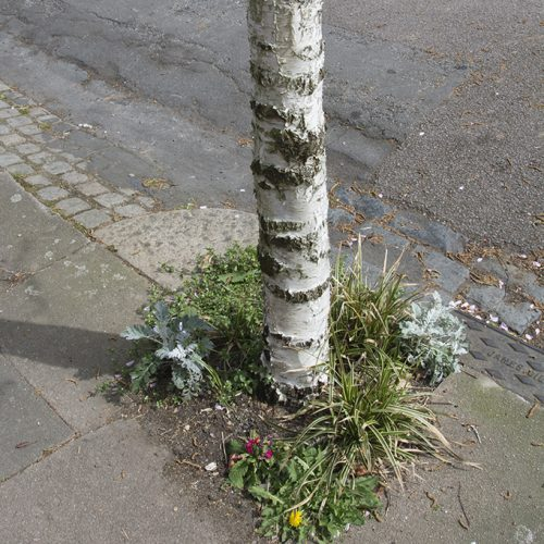 20170415_Haringey_Muswell-Hill-Avenue_-Guerrilla-garden