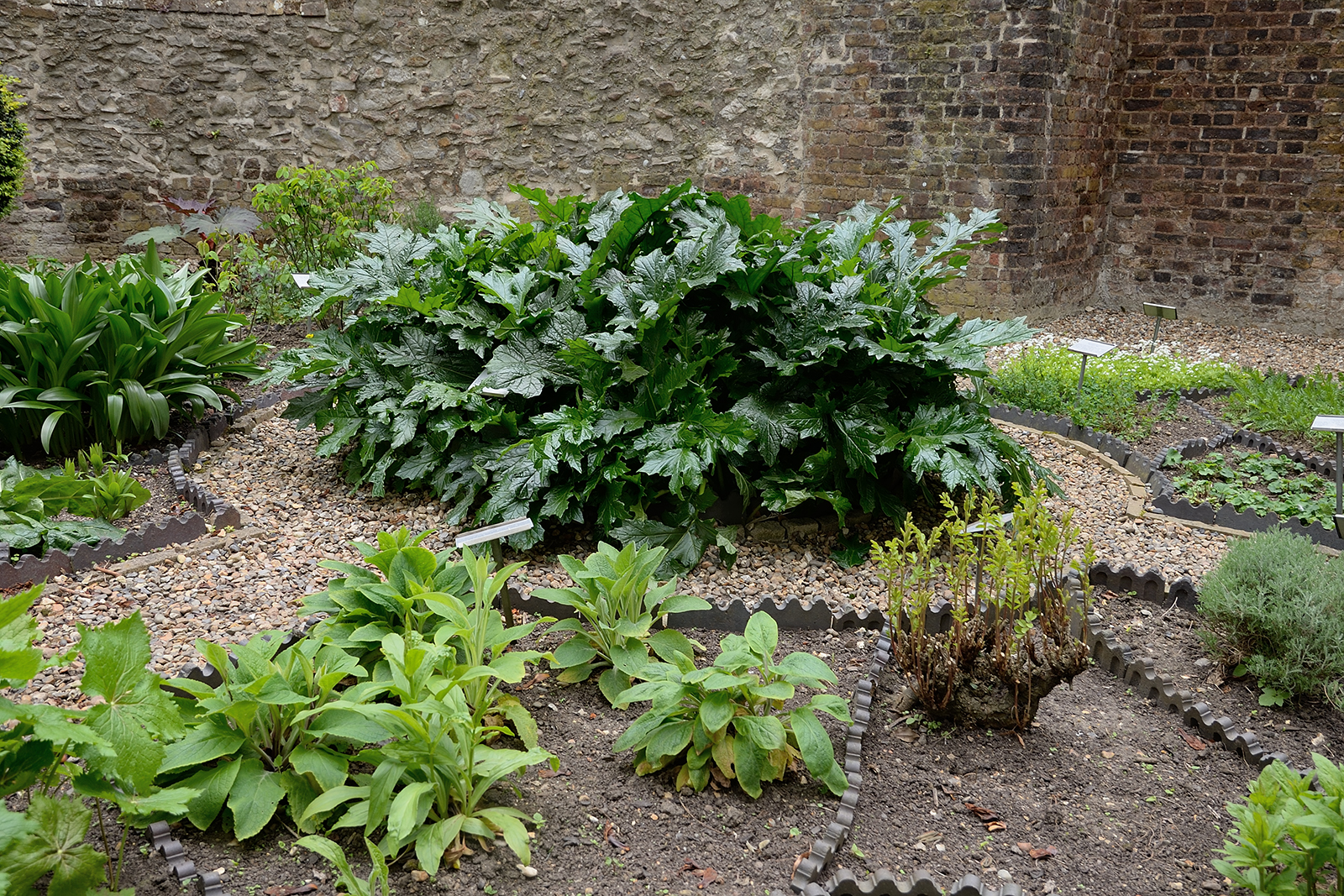20170416_City-of-London_Monkwell-Square_Medicinal-plants-in-Barber-Surgeons-garden