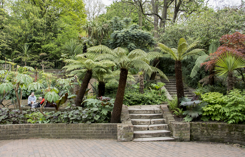 20170417_Kensington-and-Chelsea_-Holland-Park_Palm-trees-of-Holland-Park