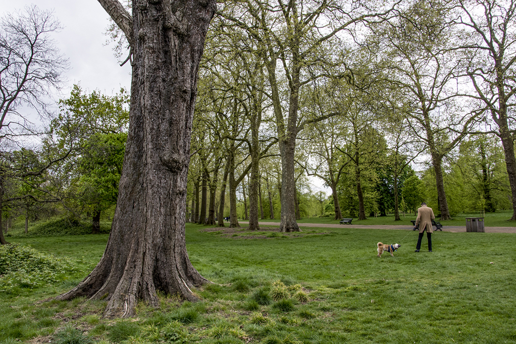 20170417_Kensington-and-Chelsea_-Kensington-Gardens_Dog-walker