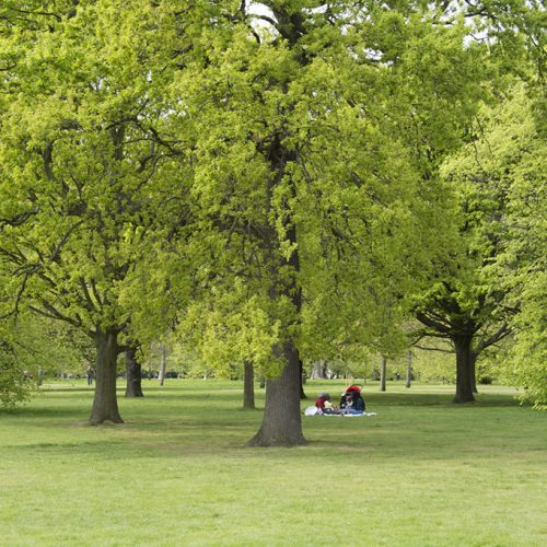20170417_Kensington-and-Chelsea_-Kensington-Gardens_Glorious-spring-day