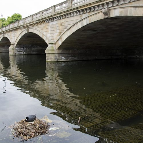 20170417_Westminster_-Hyde-Park-_The-bridge-seen-from-the-Serpentine
