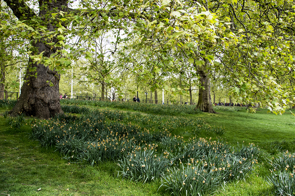 20170417_Westminster_St-Jamess-Park-_In-full-spring-glory